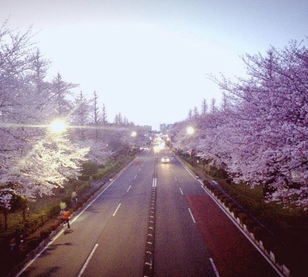 大庭「桜並木」